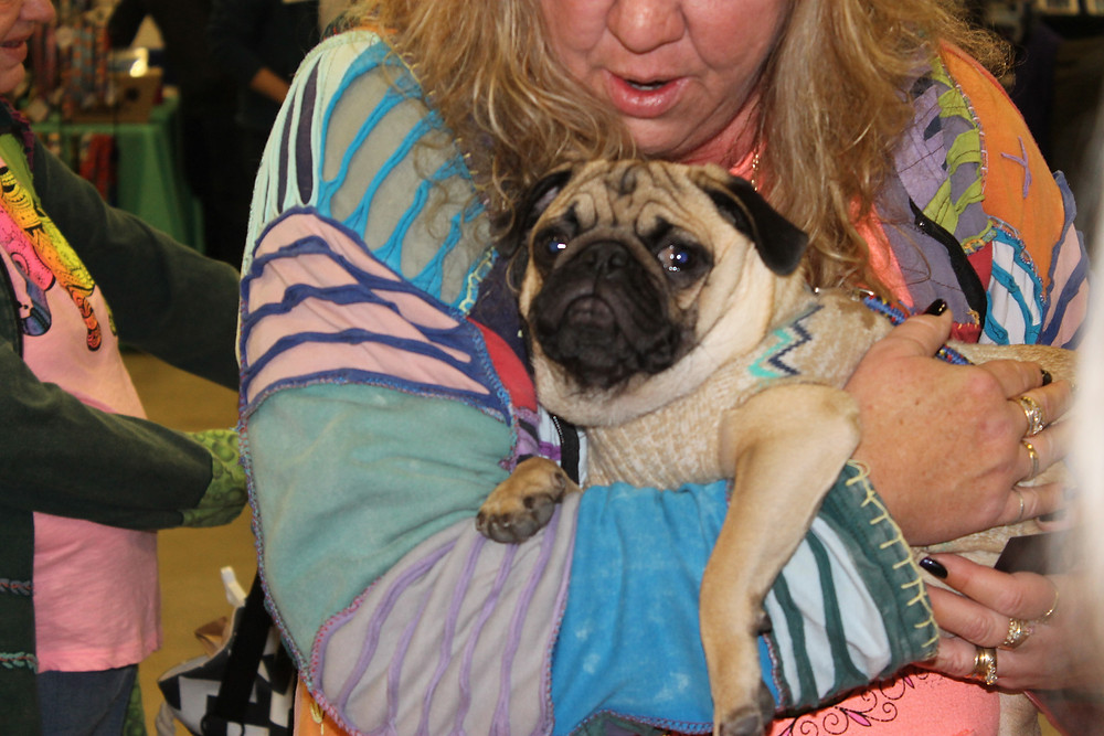 Pug dog in owner's arms