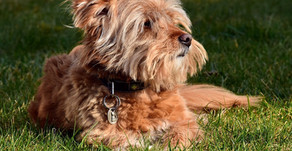 Hunde an Feiertagen - pro und contra?