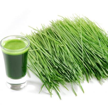 Le jus d'herbe de blé, le Super-aliment vedette des naturopathes