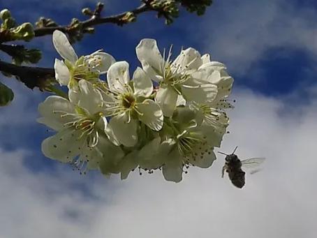 Presentation at Manawatu Beekeepers Club meeting