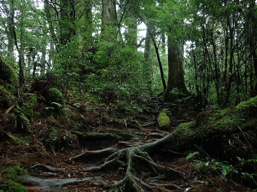 雨に濡れた森は独特の雰囲気があります。