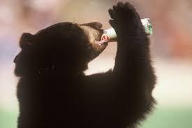 Baylor mascot drinking bottled Dr. Pepper