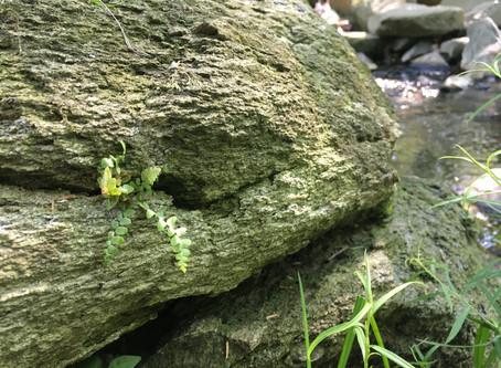 Wild Wonder August 23: Rocks