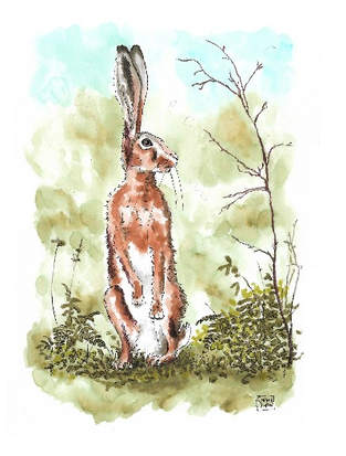 Hare Searched Everywhere
