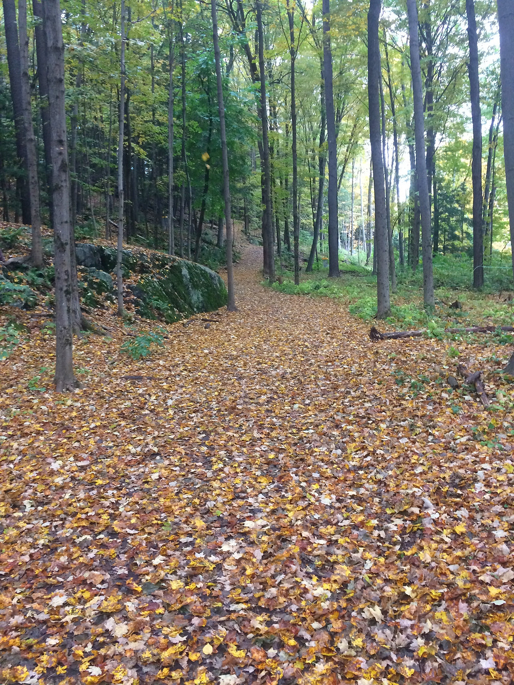 Image of a walking path covered in leaves