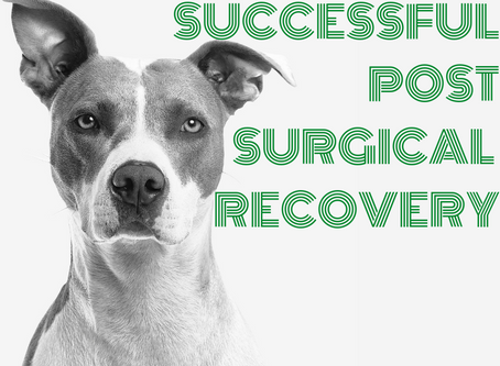 What you should know about: Post Surgical Recovery