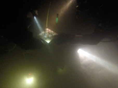 A few more shots from Spooky Halloween Night Dive