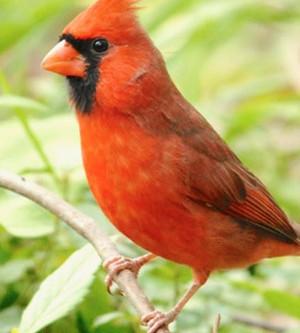 Science! - Dioxin and Furan Sensitivity in Birds