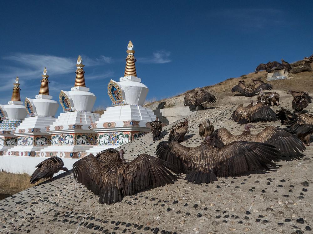 Tibet vautours rituels funéraires dakinis charnier rite mort religion bouddhisme funérailles célèstes