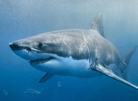 Are you an Aquarium or the Deep Blue Ocean?