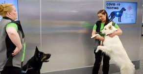 Detectan casos de coronavirus con perros rastreadores en un aeropuerto de Finlandia