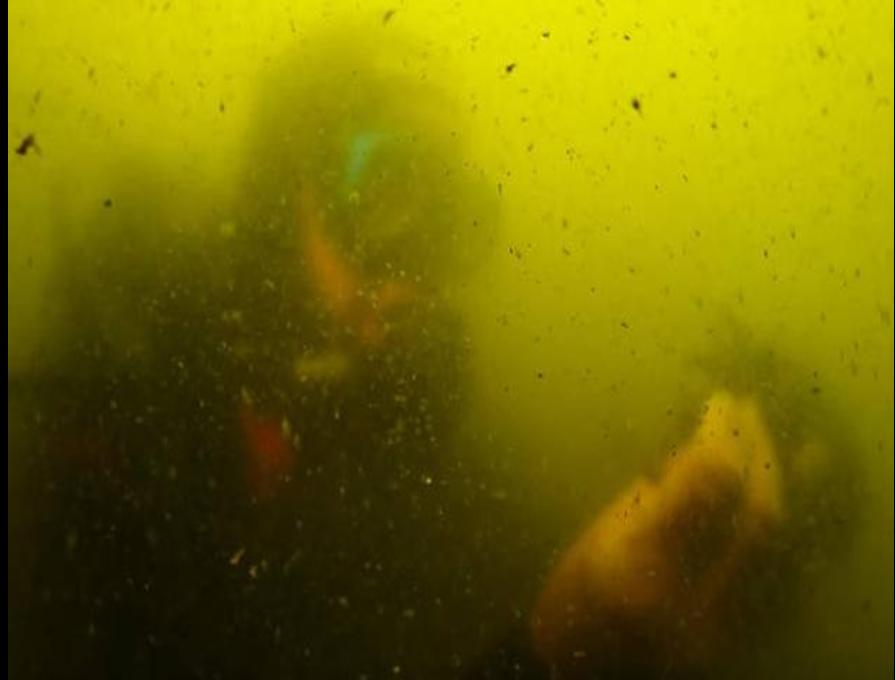 Eutrofización Mar Menor. La Verdad.
