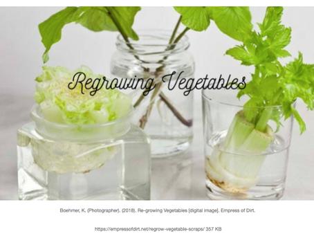 Regrowing Vegetables
