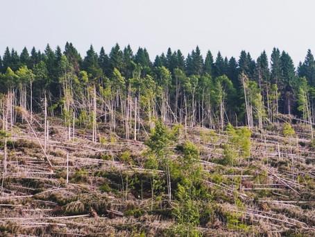 """Claudie Blanc, de Savoie Mont Blanc Tourisme : """"la parole se libère sur l'urgence climatique"""""""