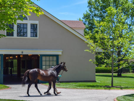 Lane's End Farm: 40 Years of Excellence
