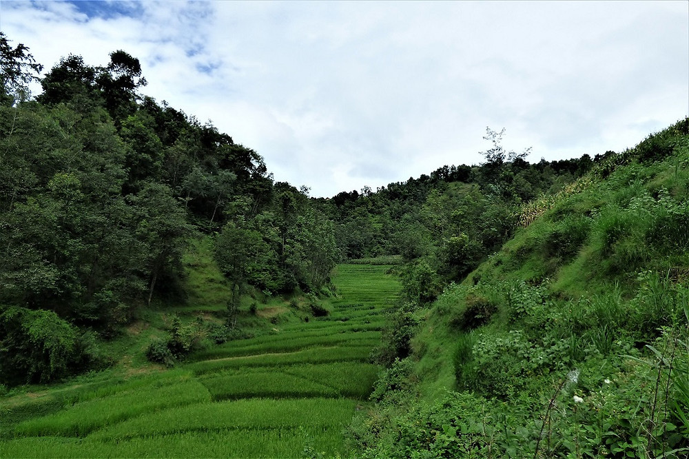 A small valley with rice.