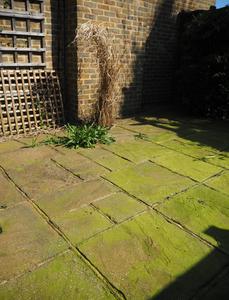 Green algae on patio slabs