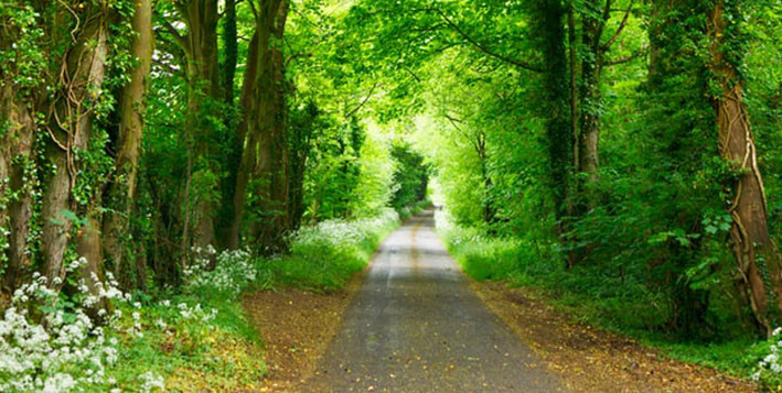 An image of a road through a green forest
