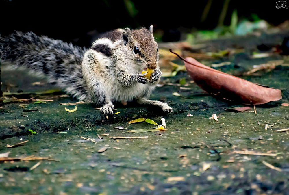 squirrel photo bengal bengali magazine online bangla canvas