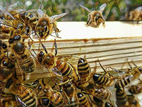 El Ácido Oxálico en la apicultura