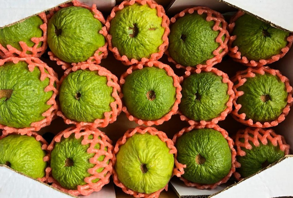 A box filled with fresh brazilian guavas ready to be exported.