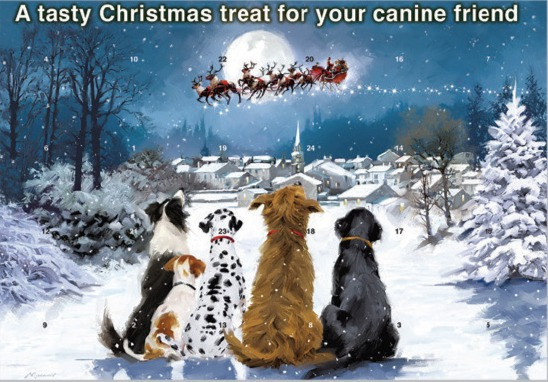 Dogs Trust charity advent calendar for dogs