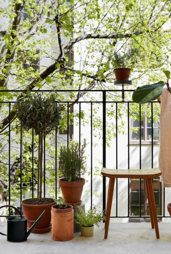 Moreover, in this way, no longer would you have to invest in any kind of expensive ideas to decorate your balcony- because, it is the plants who always speak more than anything!