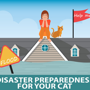 Disaster Preparedness for Cats