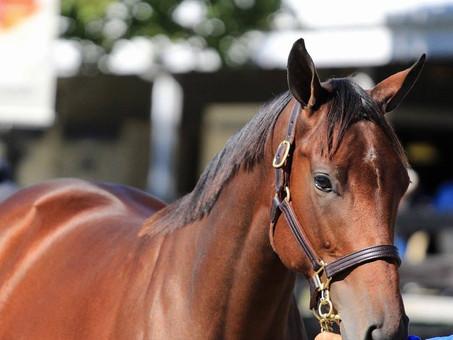 American Pharoah's Foals So Far