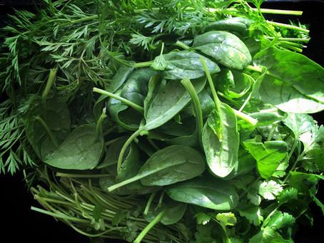 Carrot top cilantro spinach pesto