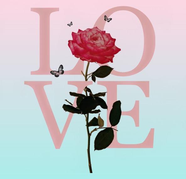 La rose rouge de l'amour