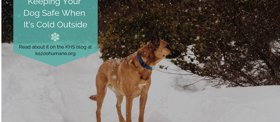 Keeping Your Dog Safe When It's Cold Outside