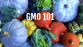 GMOs - Everything you need to know