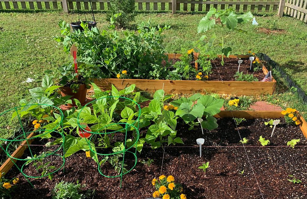 Backyard Garden Week 8