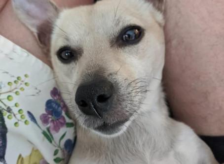 """""""I know, I'm beautiful Doggie"""