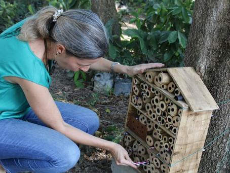 Instalan hoteles para abejas en la Universidad del Magdalena