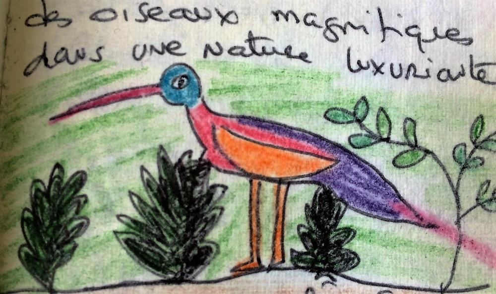 Carnet de voyage Afrique oiseaux