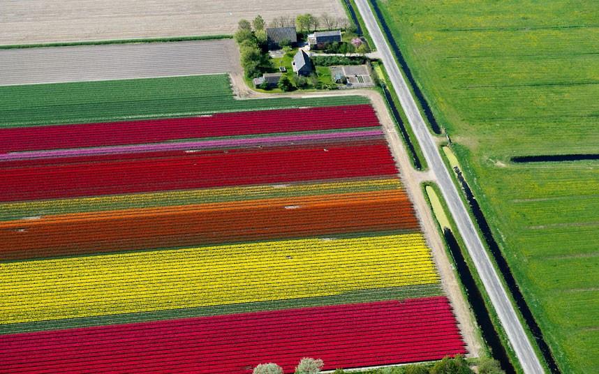 Champs de tulipes en hollande vue du ciel
