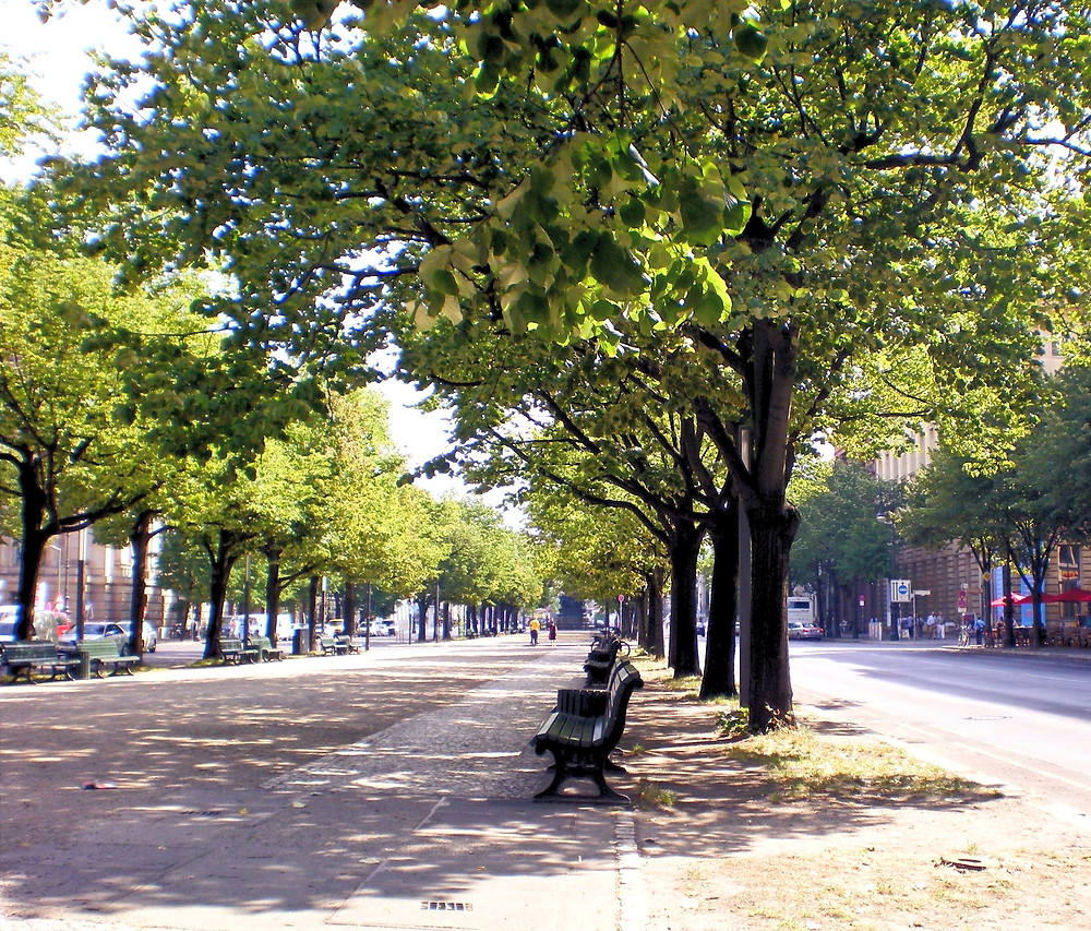 Unter den Linden Avenue on a summer day