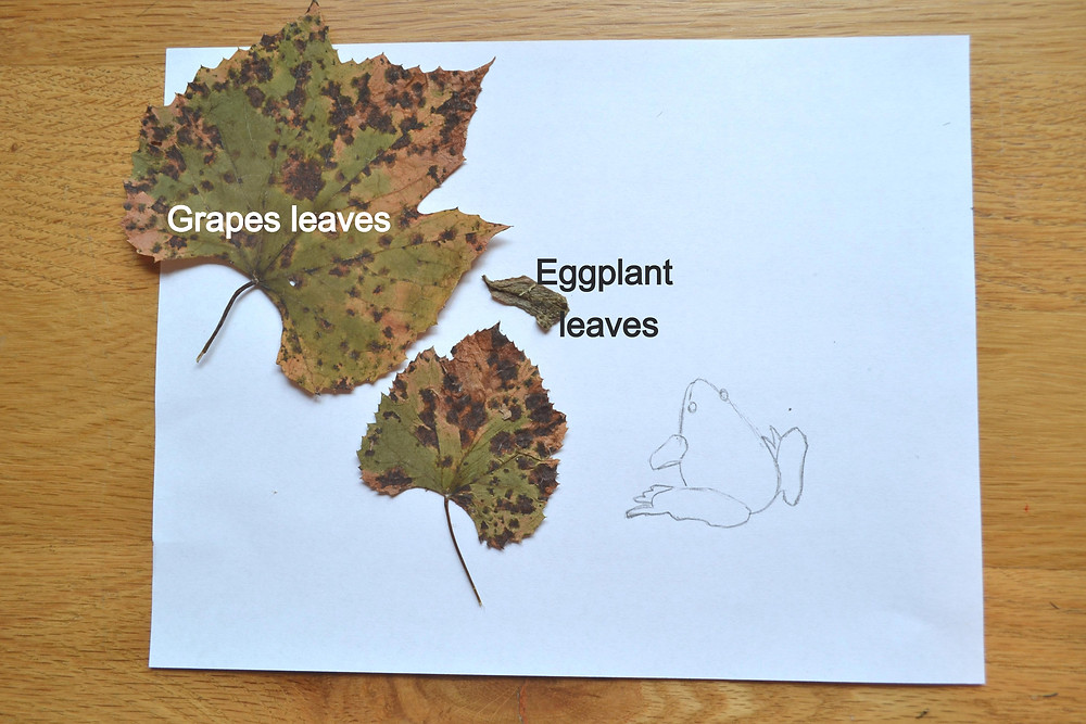 Grapes and Eggplant leaves with a sketch of a frog for Pressed Plant Collage.