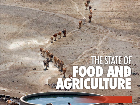 UN FAO: 3 billion people affected by water shortages