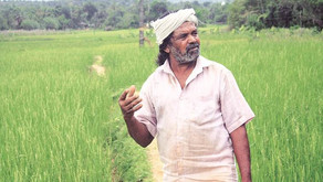 Living gene bank: Tribal farmer grows, preserves 52 native rice varieties