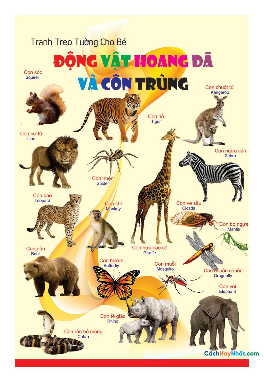 Động vật hoang dã và côn trùng vector corel