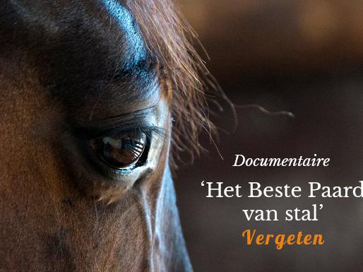 Documentaire: 'Het Beste Paard van Stal' Vergeten
