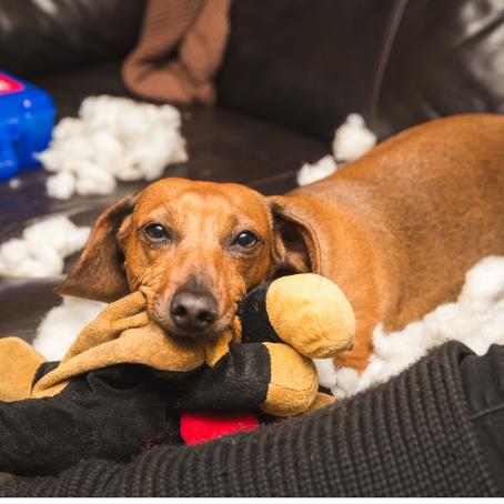 La ansiedad de nuestros perros en cuarentena