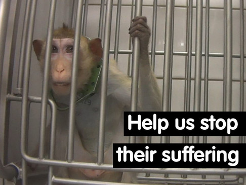 Cruelty exposed against dogs and monkeys in Toxicology Lab in Germany