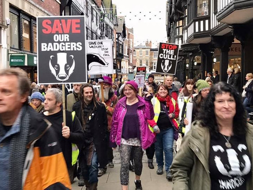 The Badger Army Marches On