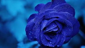 [심리상담 이야기] Blue: 코로나 블루