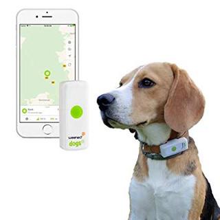 GPS pour chiens chats enfants et séniors