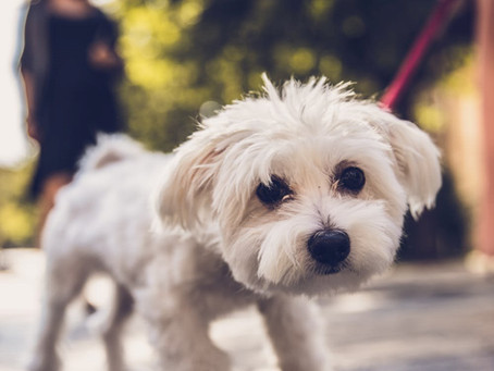 Empathising with Your Reactive Dog